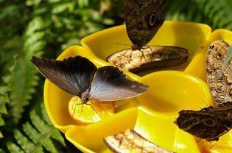 музей бабочек в москве